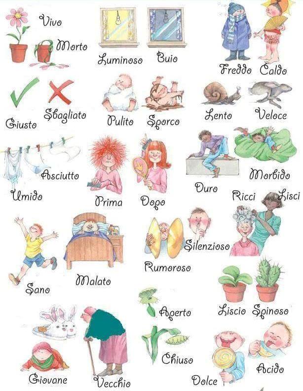 velký italština hubený